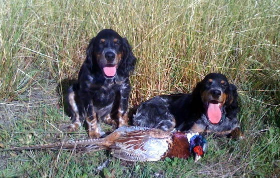 Nina and Tank with First Pheasant