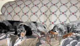 Sofa setters