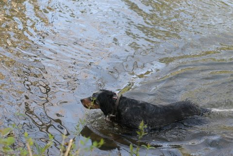 Midge has to take a swim to get things started