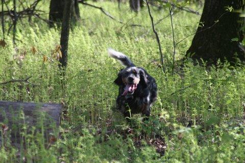 Luke having a great run