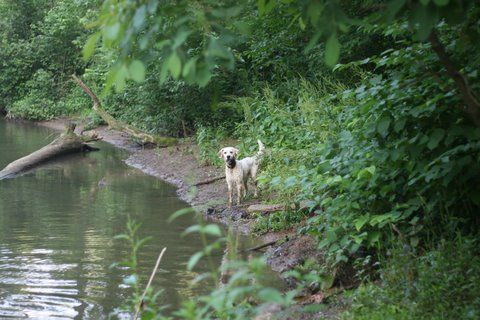 Ike at the creek