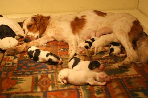 Dora and pups