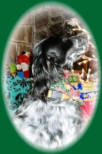 Kohl Christmas 2010
