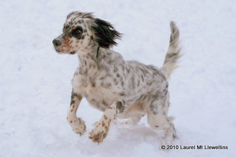 Mia loves the snow.