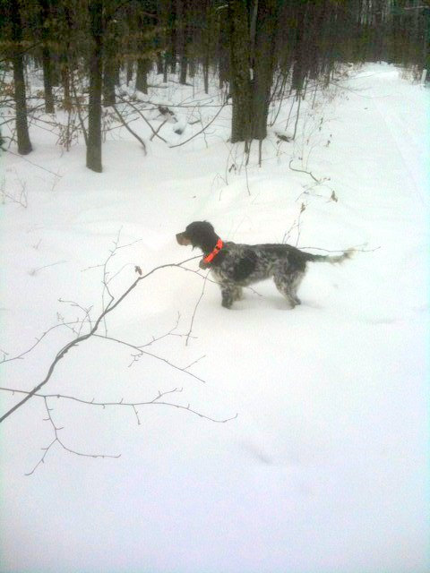 Riley in the Allegheny National Forest