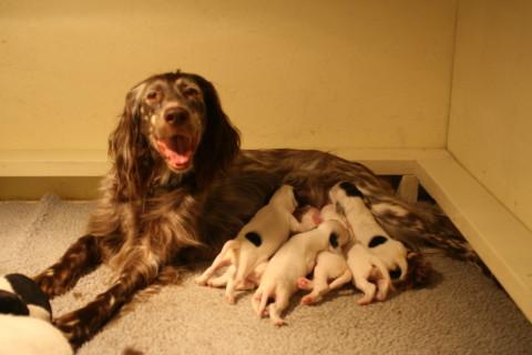 Maddie and Puppies 1 week old