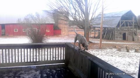 Kea on the deck railing
