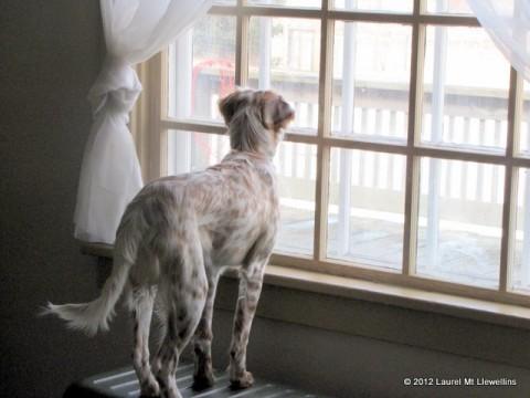 Kea at the window