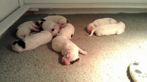 Dora x Steele Pups Day 3