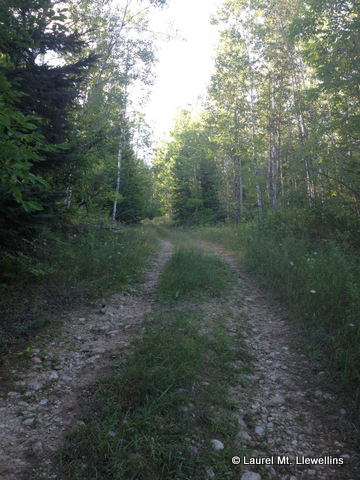 A Northwoods trail