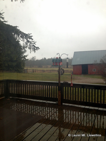 Rainy November Day in the Northwoods