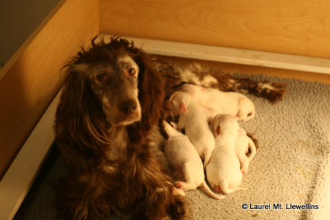 Maddie and pups
