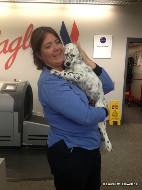Ely getting lovin' at by the American Airlines employess. :)