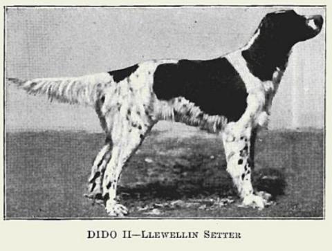 Dido II