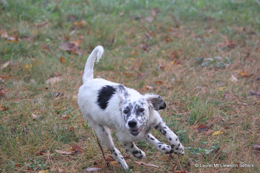 Kat puppy