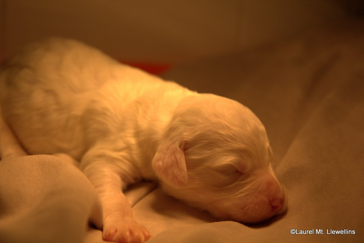 """#9: Male: Belton (color unknown at this time) """"Zephyr (Zeffer)"""""""