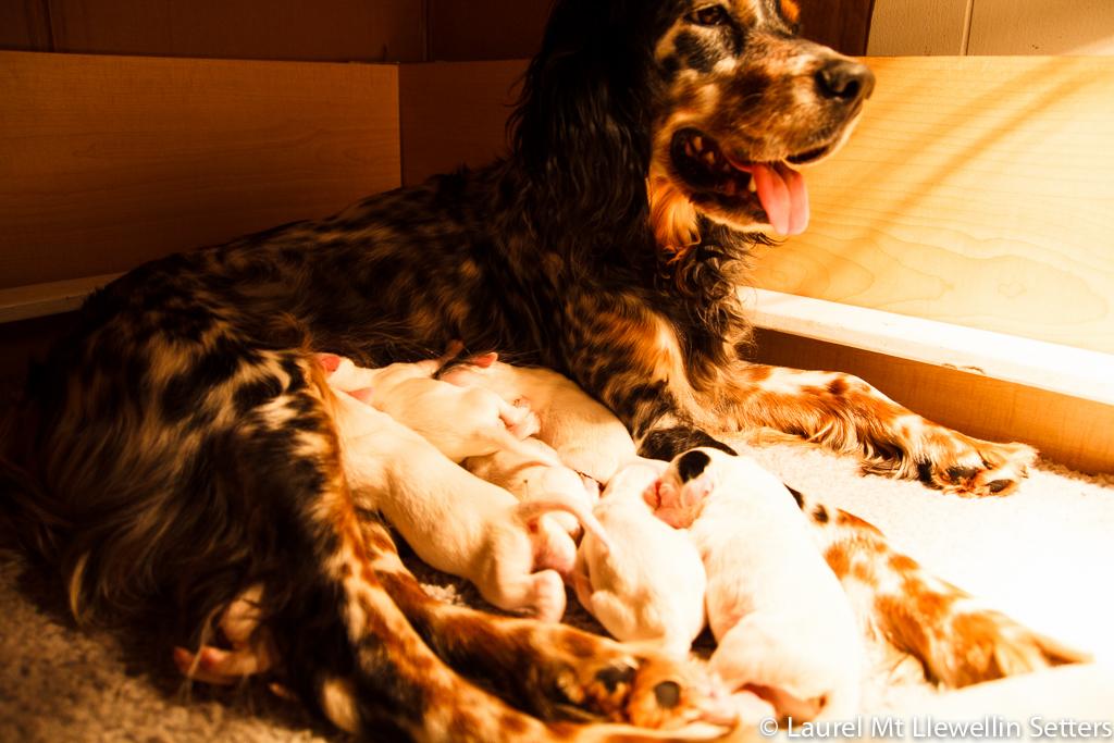 Addie & Puppies