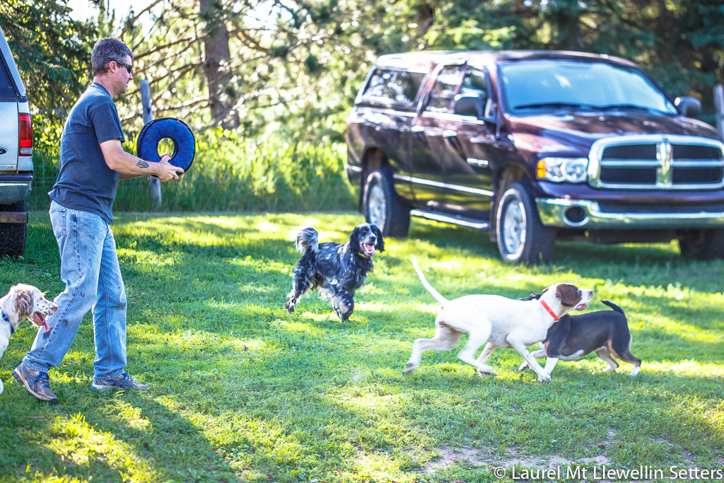 Scott playing fetch with some of the dogs.