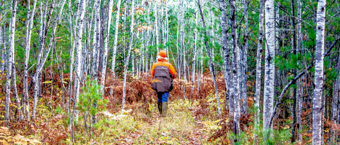 Into the Ruffed Grouse Woods
