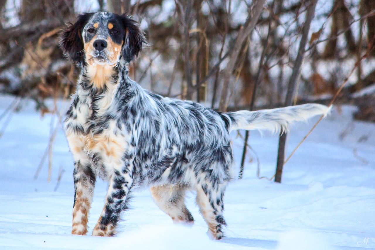 Alex-puppy
