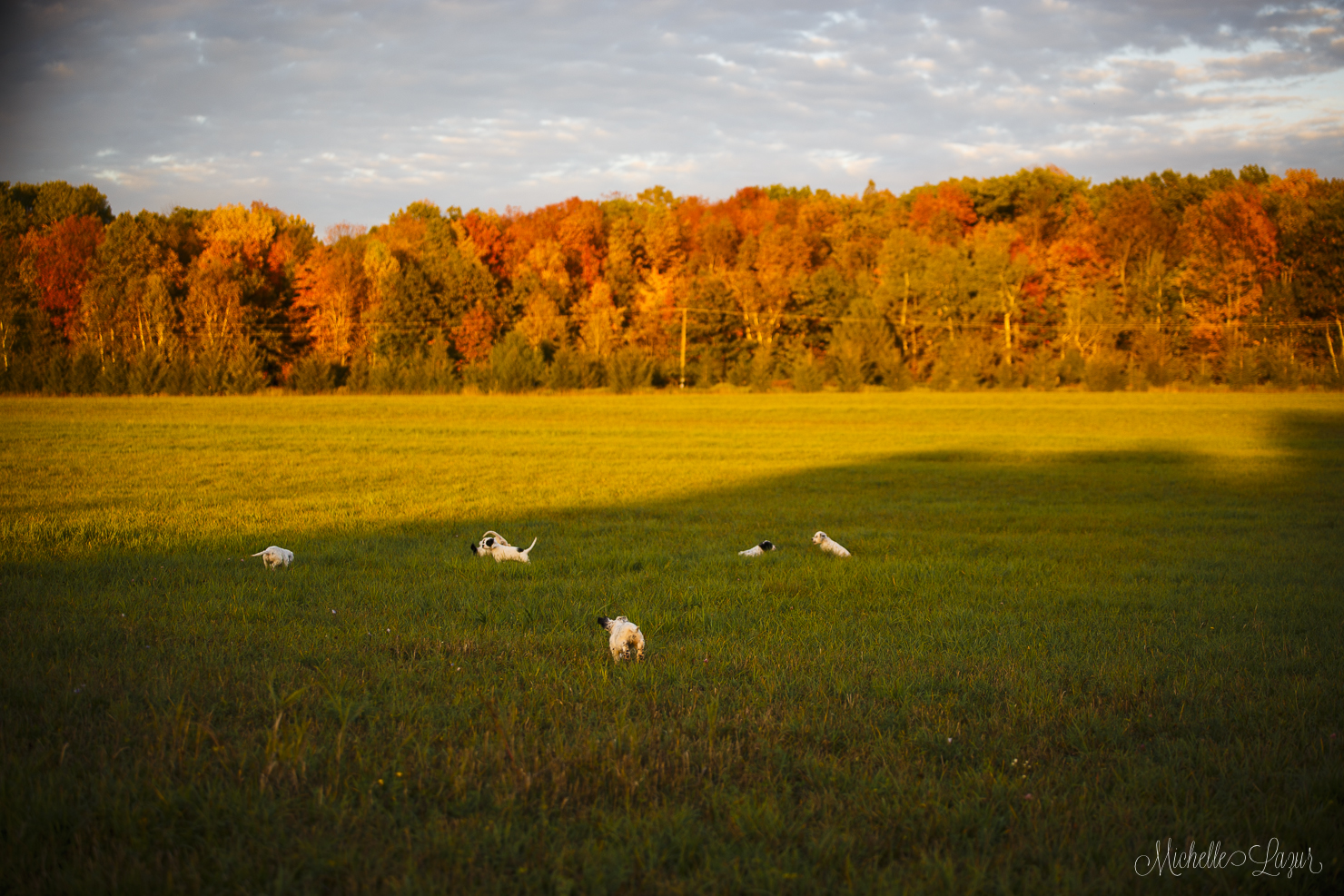 Beautiful fall walk with the puppies 20150928-_MG_2173