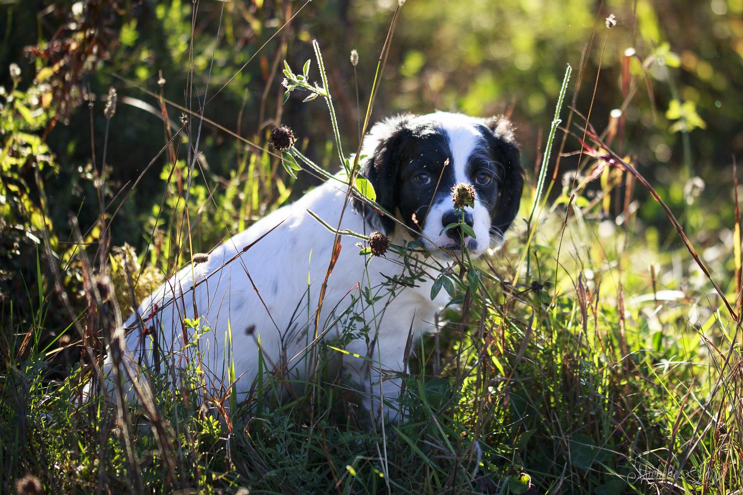 Cono Puppy 20150929-_MG_2413
