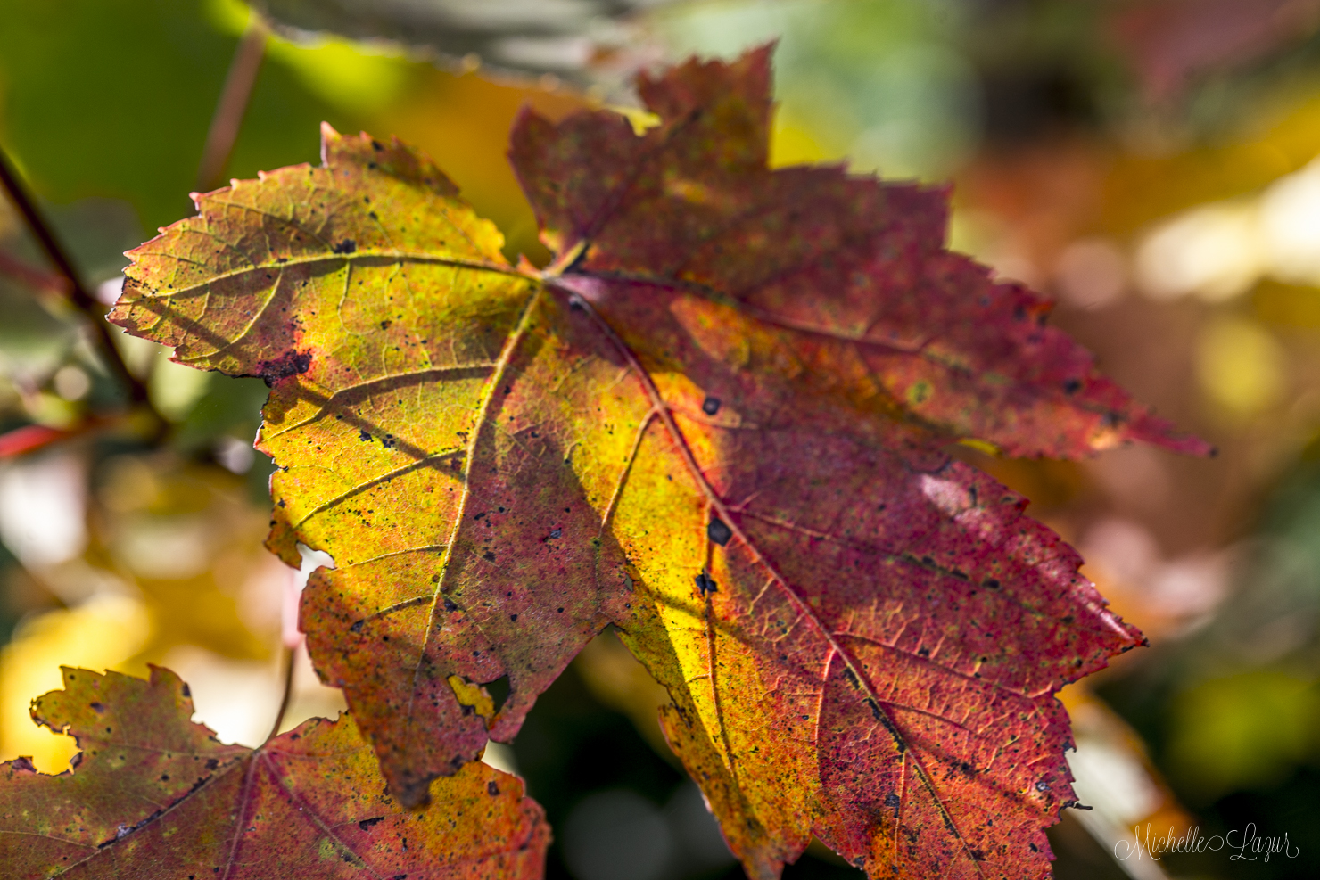The beauty of Autumn 20150930-_MG_2493