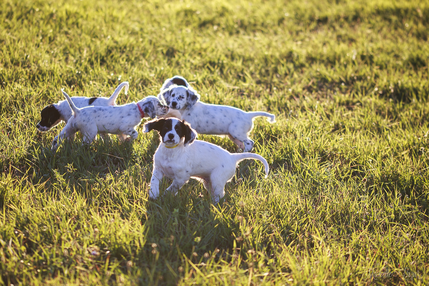 Puppy play time 20150930-_MG_2595