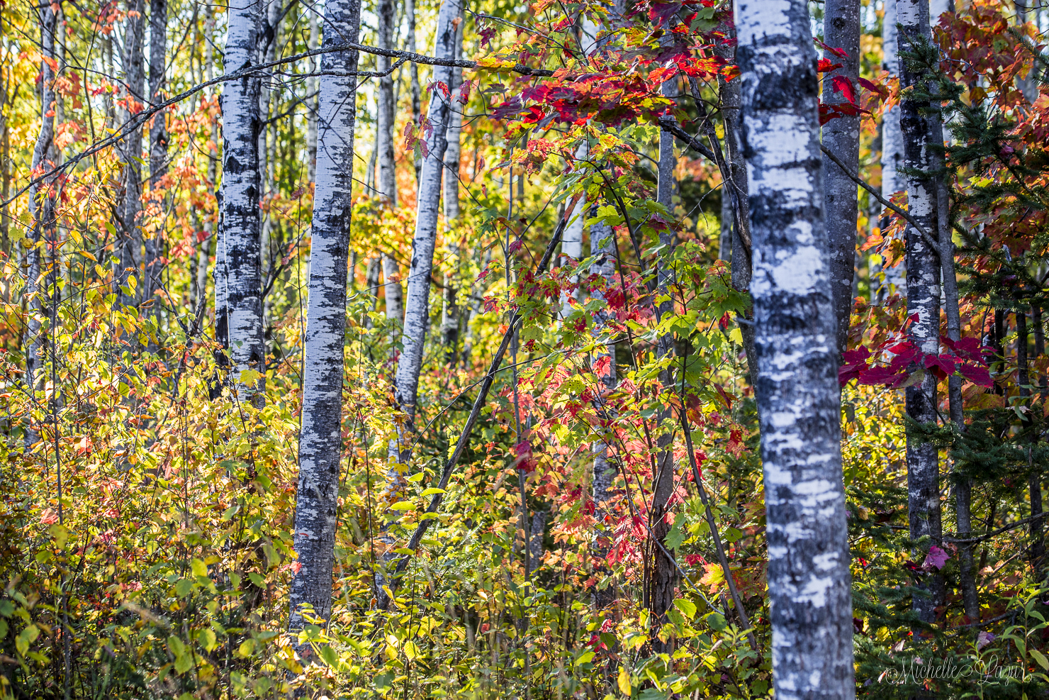 The Northwoods on October 1st, 2015 20151001-_MG_2727