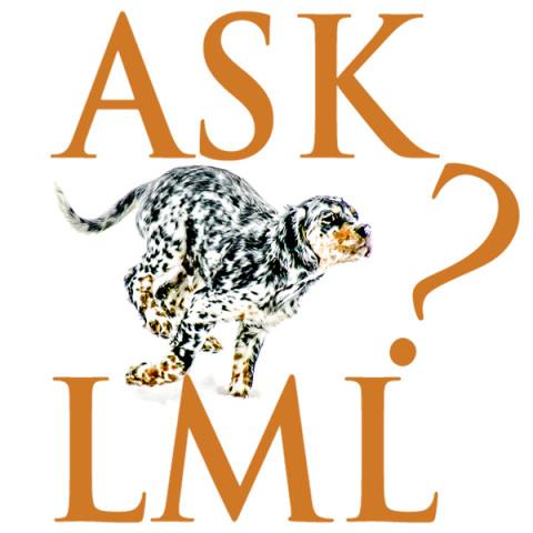Ask Laurel Mt Llewellin Setters Podcast Logo