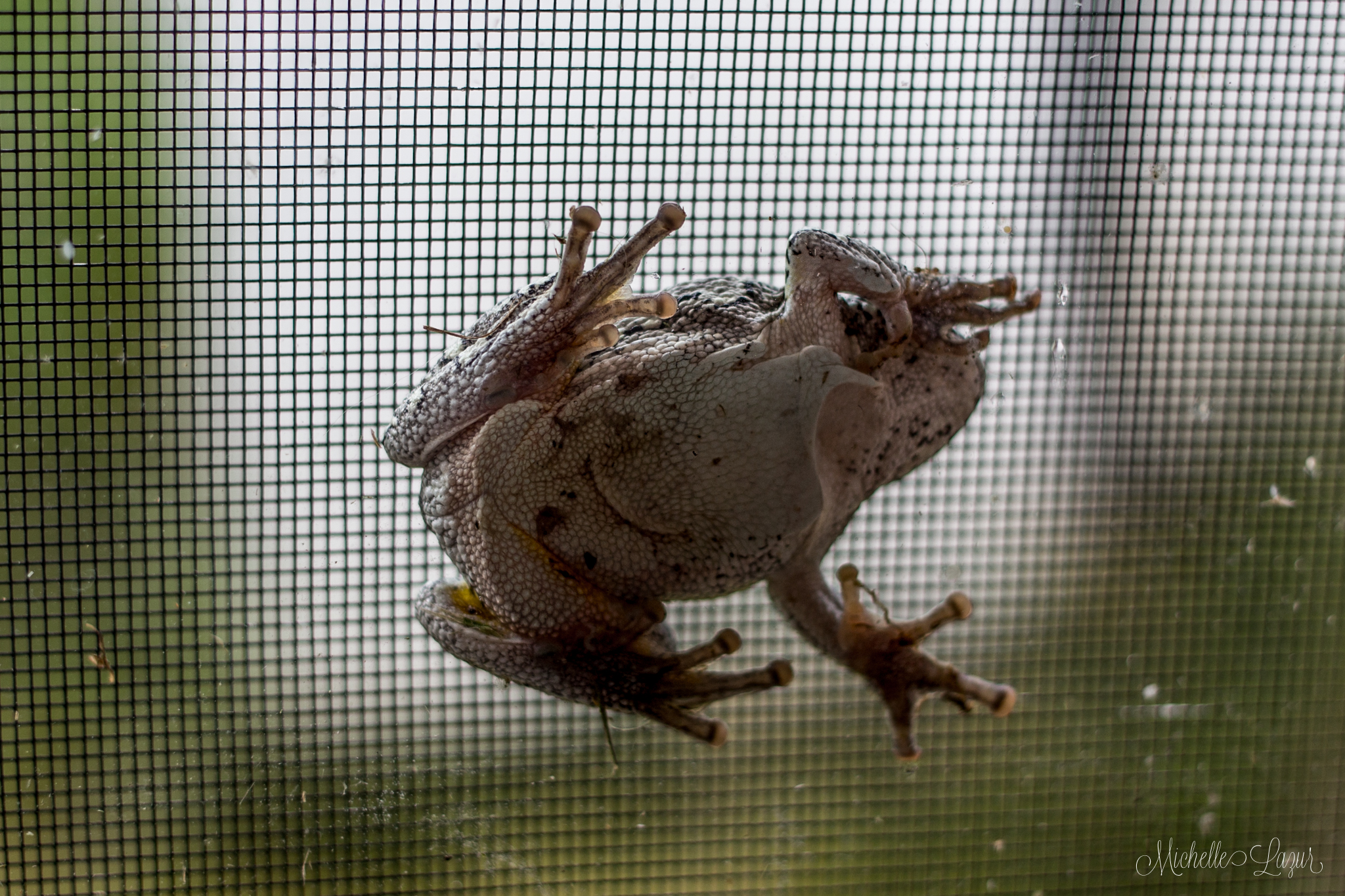 Crazy from wedged between the screen and window of the door. He safely escaped with a little help.