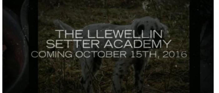 LLEWELLIN SETTER TRAINING