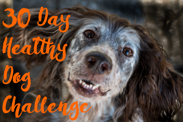 30 Days to a Healthier Dog Challenge