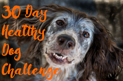 Take the 30 day healthy dog challenge today!