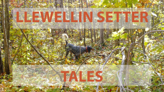 The book, Llewellin Setter Tales
